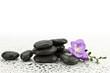 Frezja na kamieniach do masażu