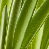 Green fresh leaf background