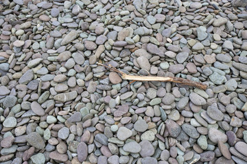 Drift wood lying on pebbly beach