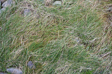 Close up of grass and stones