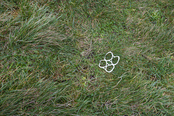 Plastic can rings littered on grass