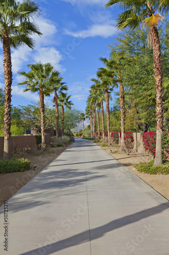 Empty Private Road lined with Palm trees