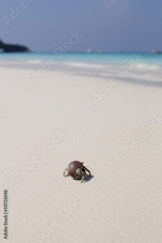 Hermit crab on white beach