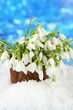 Bouquet of snowdrop flowers in vase with snow,