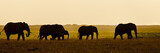 Group of Elephant seens backlit