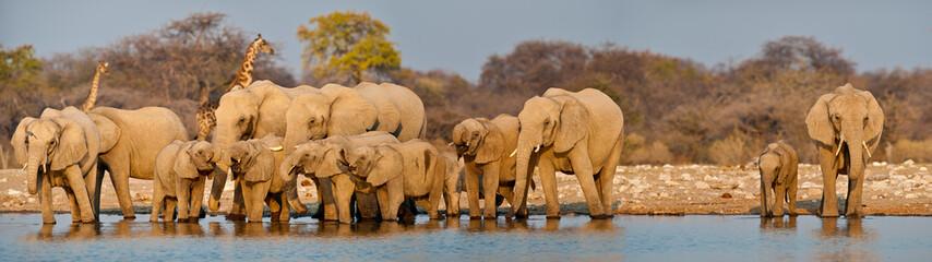 Elephant herd at waterhole