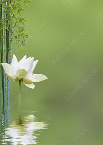 Canvas Lotusbloem décor relaxant asiatique