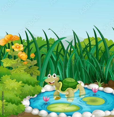 绿色绘图自然花荷花叶子蓝色载体风景鲜花黄色龟see