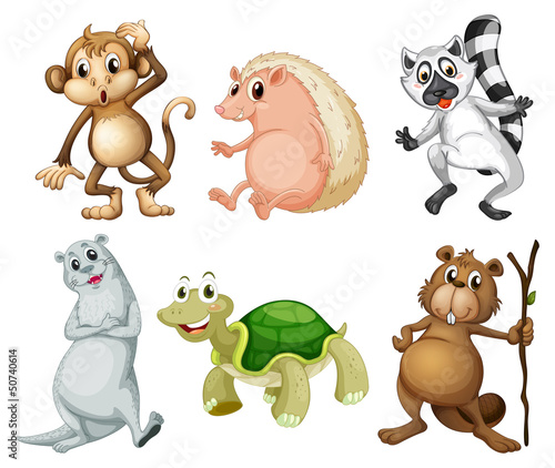 Six different kinds of wild animals
