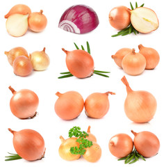 Onions on a white background
