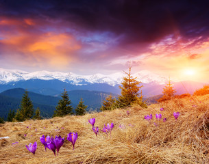 Spring Evening in the Mountains