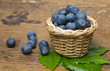 blueberries in a little basket close up