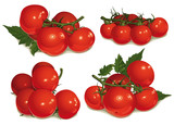set of tomatoes, bunch
