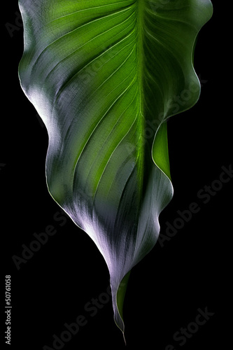 Green Leaf. Spa Ambient