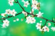 ramo fiorito