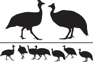 Vector silhouette of guinea fowls in different positions