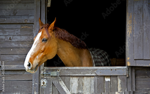 Horse on stable