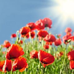 Sonnenstrahlen auf einer Blumenwiese