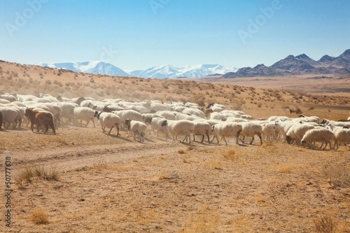 a flock of sheep on the steppes