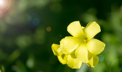 yellow flower under the sun