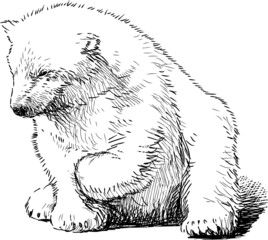 sitting polar bear