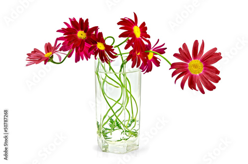 Feverfew crimson in a glass
