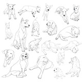 Drawing set of dog on many pose.