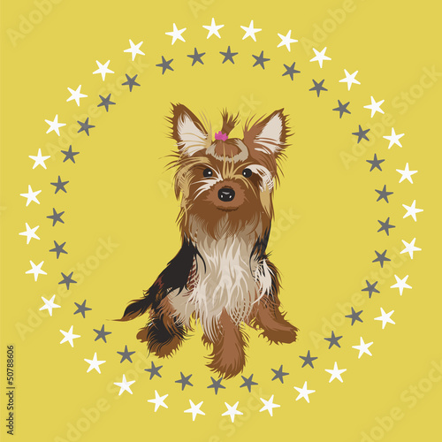 Beautiful yorkshire terrier vector illustration