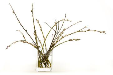 gałązki bazi w szklanym wazonie na białym tle.