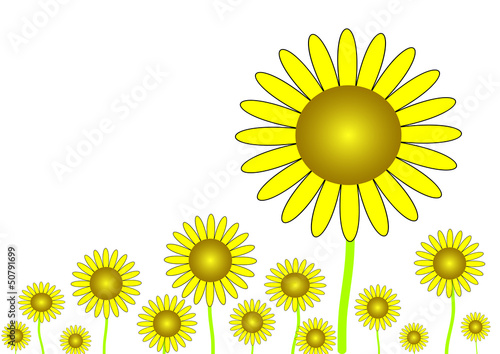 The yellow sunflower illustrated on the white background