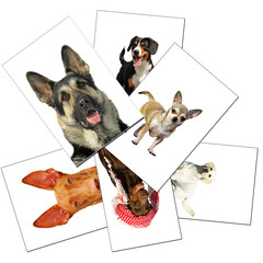 `collection of dogs photos