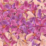 orchid flowers seamless composition