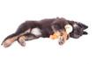 Hundewelpe mit Stofftier Küken