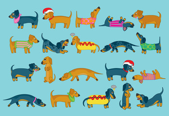 Cute collection of sausage dogs or dachshunds