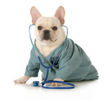 veterinary care - 50802224