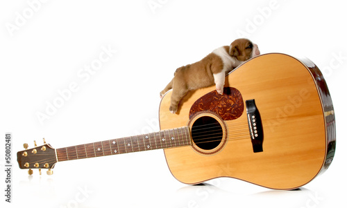 puppy sleeping on a guitar
