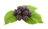 Blackberries on green leaf.