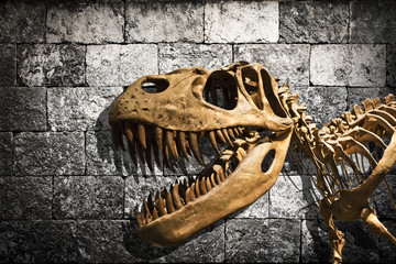 Tyrannosaurus Rex skeleton in stone wall background