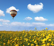 Over the blossoming field of flying a balloon