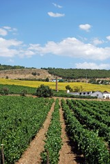 Vineyards, Cortes de la Frontera, Spain © Arena Photo UK