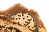 Honeycomb and worker honey bees close-up