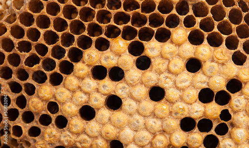 A picture of beehive ,Bees that are out of the nest.