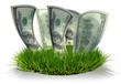 3D Dollars growing