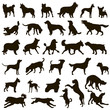 Dog collection. Vector silhouette