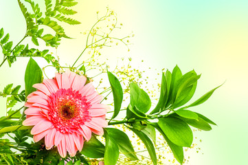 gerbera flower and green leaves