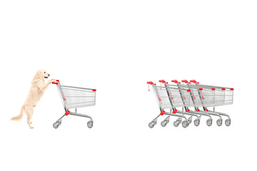 Dog returning an empty shopping cart