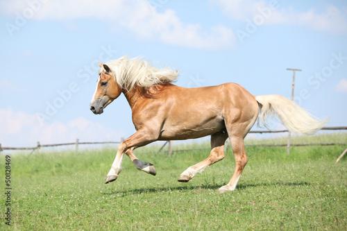 Fototapeten,pferd,galopp,schnell,moving