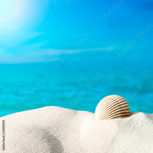 Shell on the beach