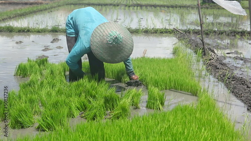 Man working on rice farm in Bali