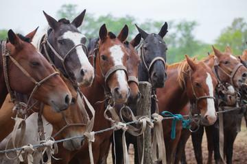 Horses at gaucho festival, Argentina